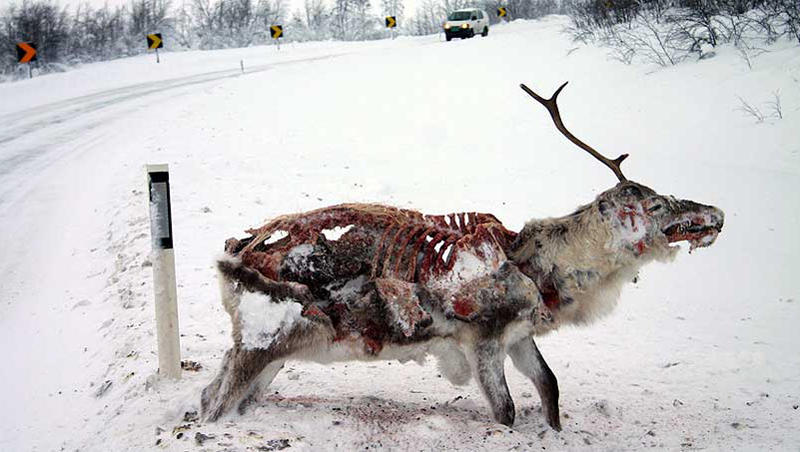 http://thewhorechurch.com/wp-content/uploads/2011/05/frozen-deer.jpg